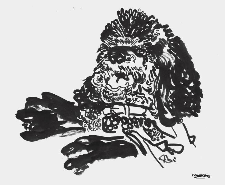 Simon-H-poodle