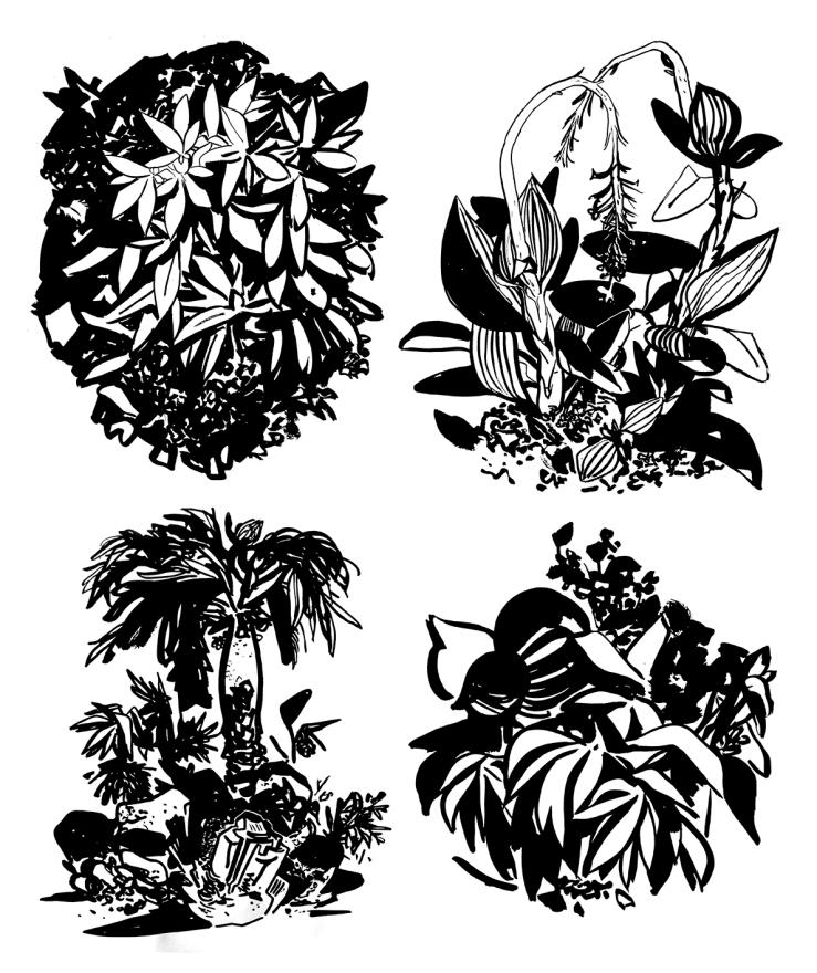 Simonh_Basic Tropics_15